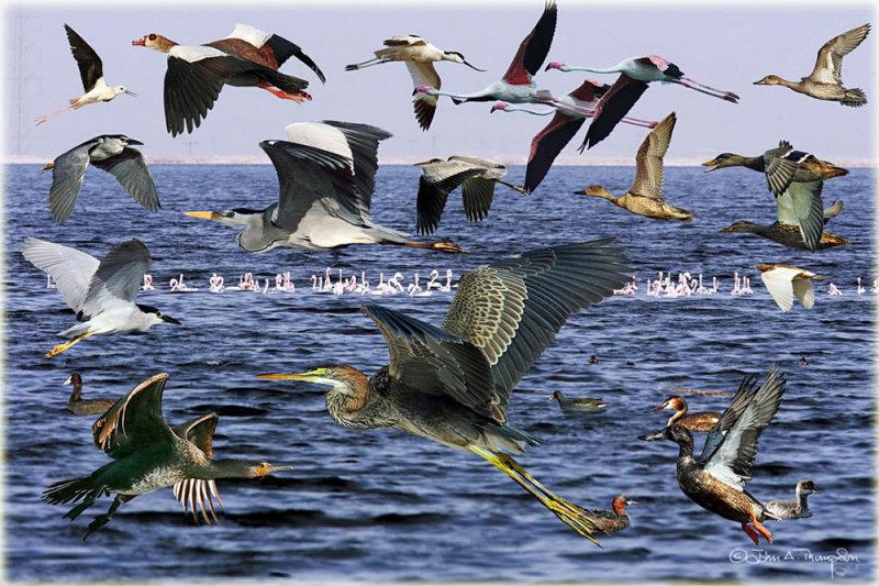 Birds on the Lake Montage