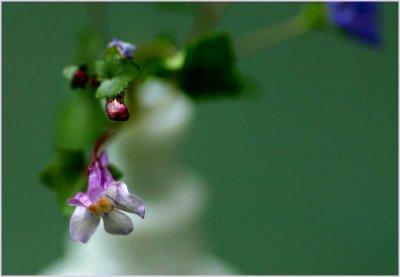 Tiny flower on creeper