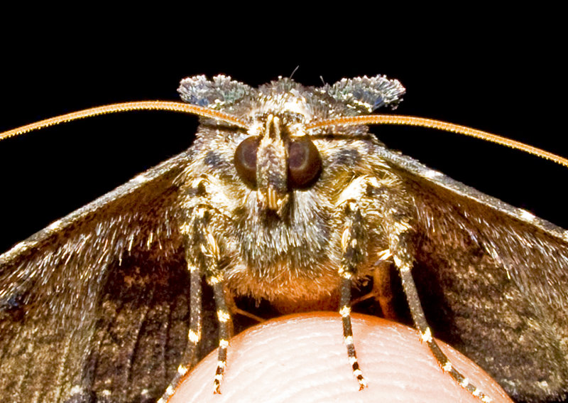 Moth-2010-1