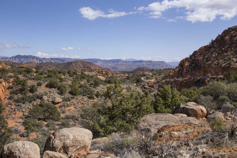 Red Cliffs Conservation Area - Dixie Forest