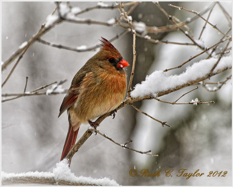 20121229-197_SnowW.jpg