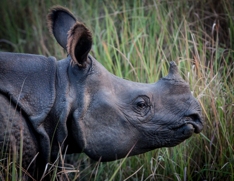 Chitwan Safari