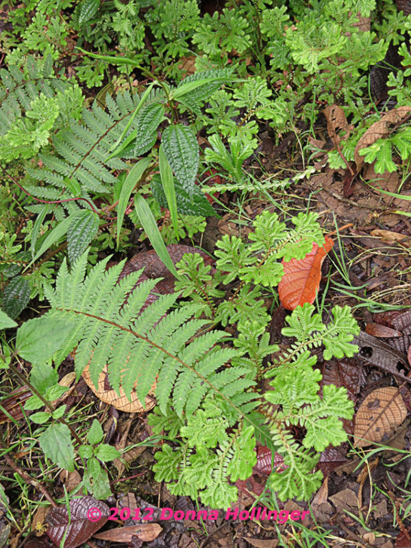 850.ferns.5016 copy.jpg