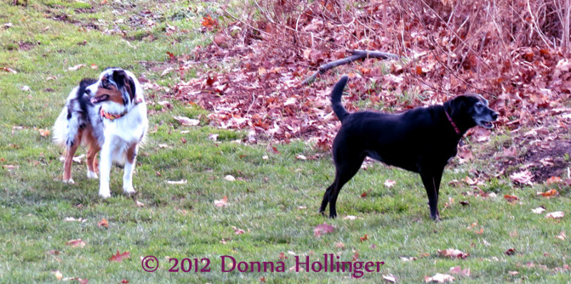 Shepherd and Lexie