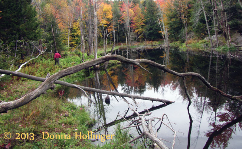 Still water on the Beaver Pond