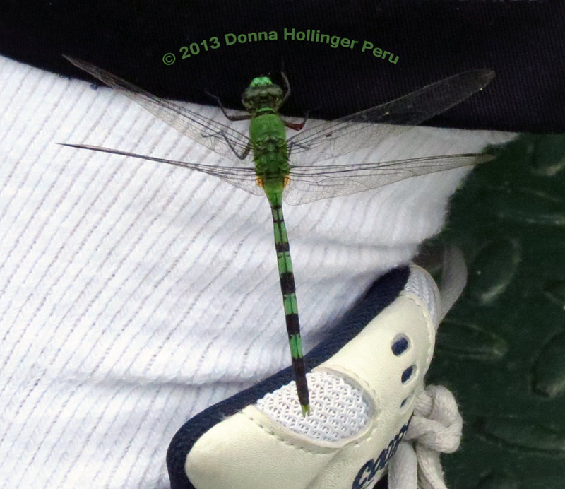 Gerrys Foot with Dragonfly