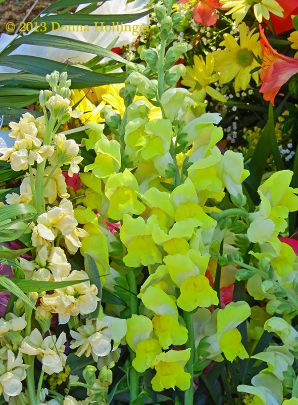 Yellow Snapdragons and Cream Stock