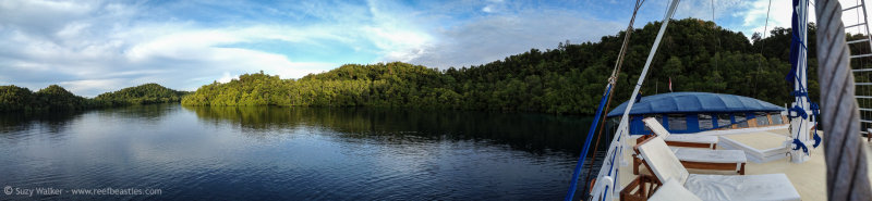 iPhone Panorama Mangroves