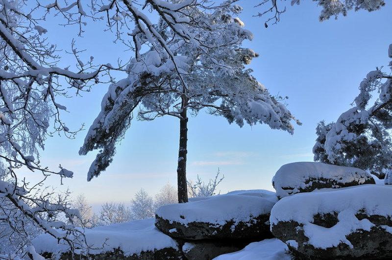 Parasol des neiges