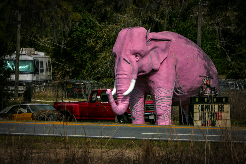 Pink Elephant, near Inverness, Florida, 2013