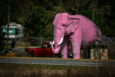 Pink Elephant, near Inverness, Florida, 2013