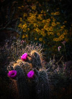 Desert surprise, Gold Canyon, Arizona, 2013