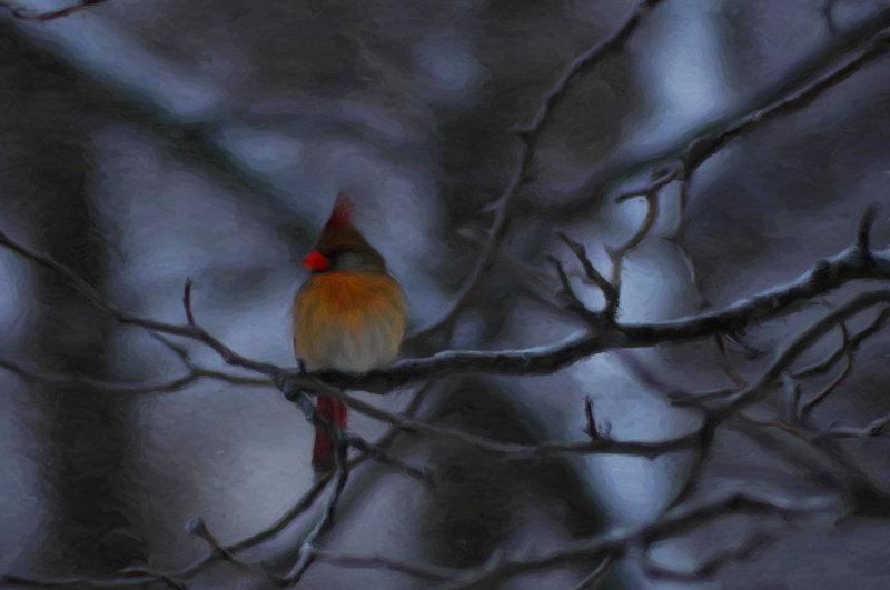 Madam Cardinal