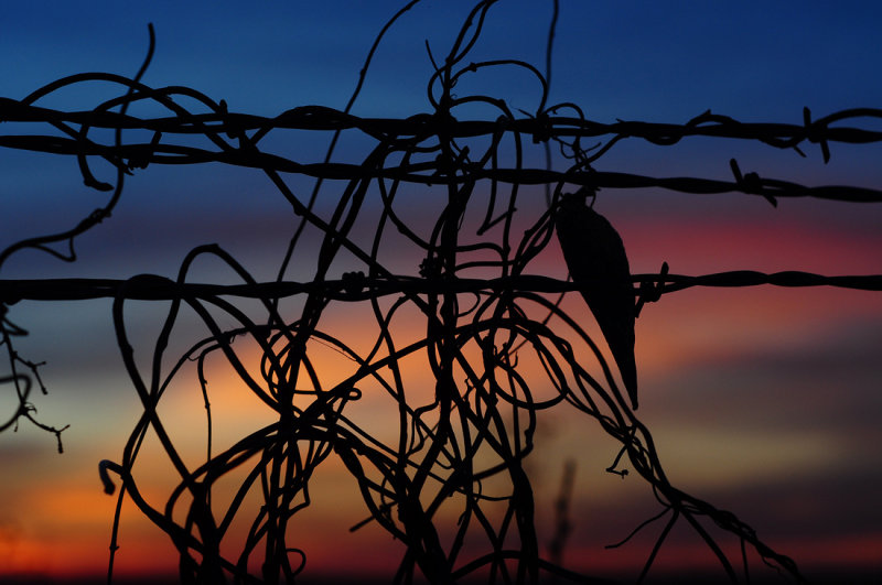 Sunset & Vine