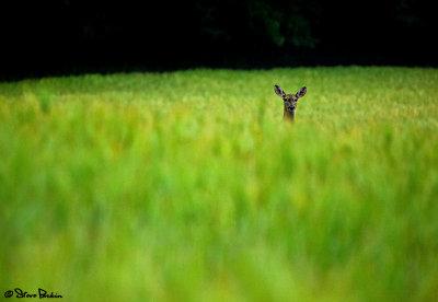 Sneakin a Peek