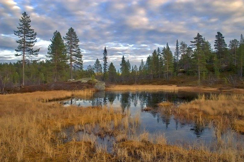 Myregvarv, Lifjell, Telemark