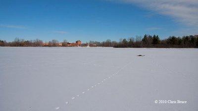 Middle of Mud Lake IV (Red Fox tracks)