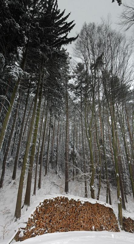Brennholz: Erneuerbare Energie aus heimischen Wäldern