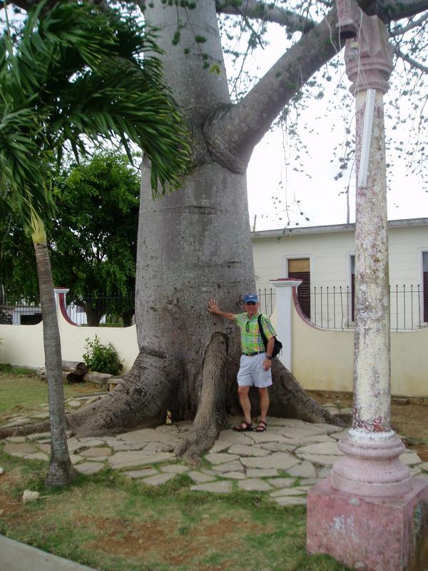 lA CEIBA TREE, RINCON / Jack Miller