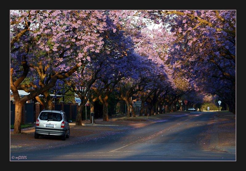 Pretoria<br>Jakaranda Stad (II)