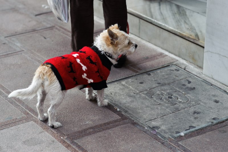 Dog in red