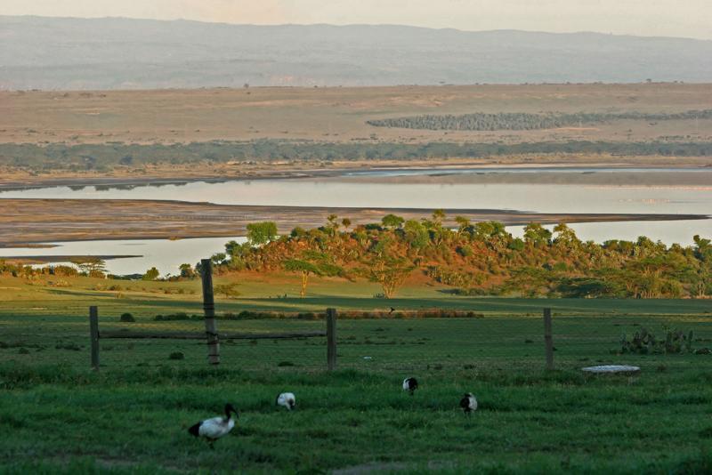 Réserve du lac Nakuru