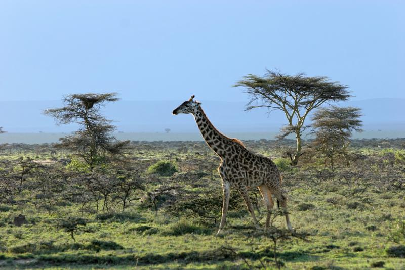 Sur les pistes en direction de la réserve de Masaï-Mara