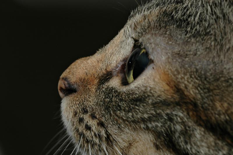 Catseye.jpg