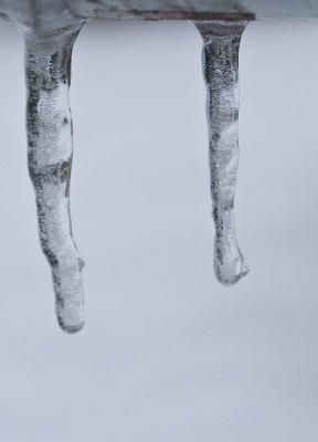 Icicles (forest for the trees)