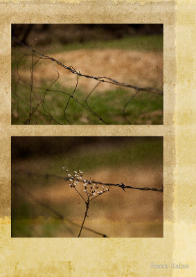 Barbed Wire Diptych