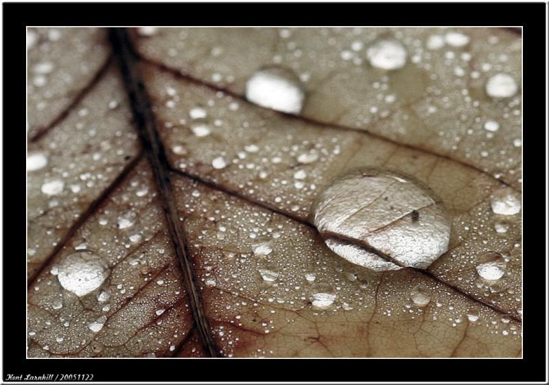 Water drops -