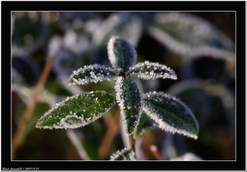 20051129 - Cold -