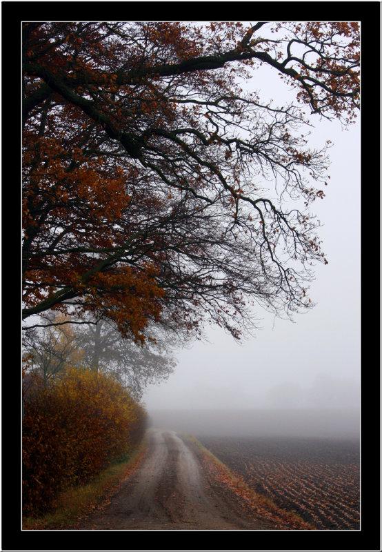 20071104 / Foggy day