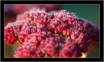 Frozen flower top