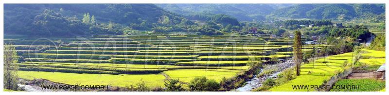 Terraced Rice Fields in Autumn