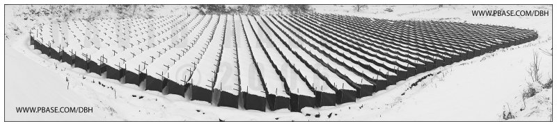 Ginseng Shelters in Winter