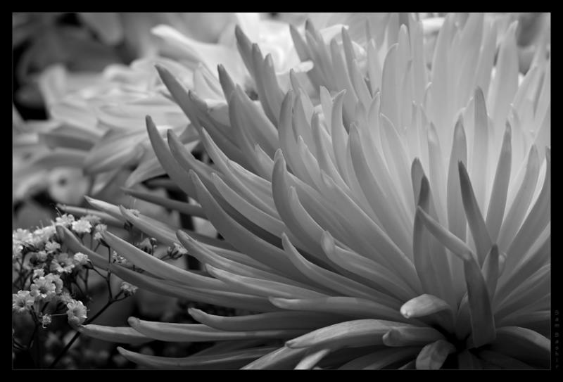 Post Processing to B&W