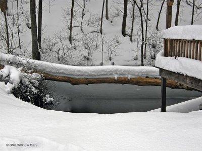 The tree bridge over our pond.