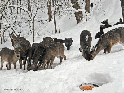The Wildlife Barnyard