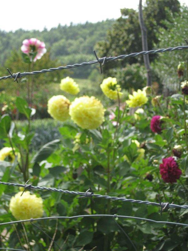 Je minquiète pour les conditions de détention des fleurs en Ardèche