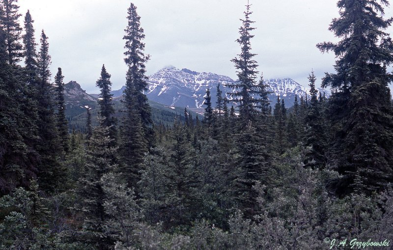 view in Denali National Park