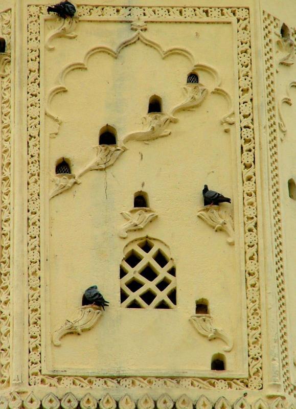 Mosque Pigeons