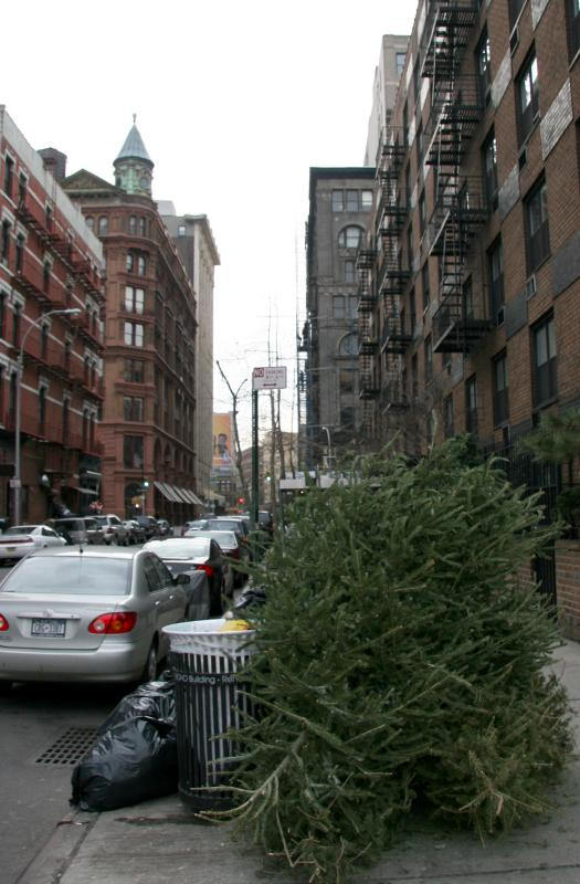 Christmas Tree Disposal at Mercer Street - East View