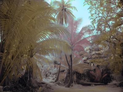 IR hand tint palms
