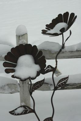 Rusty Snow Flowers