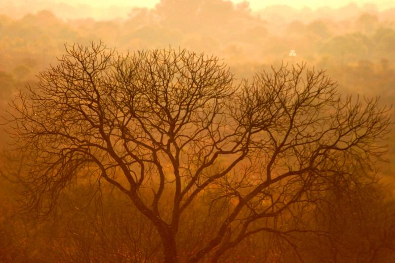 Zambia - Tree in sunset