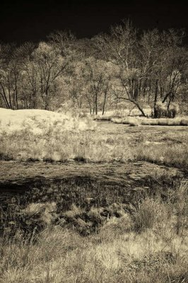 4/16/08 - Infrared Wetlands