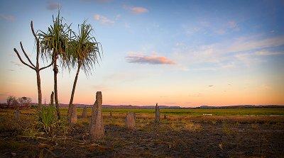 Pandanus Palm and termite mounds at Hawk Dreaming