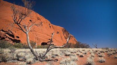 Uluru and Tree in the desert