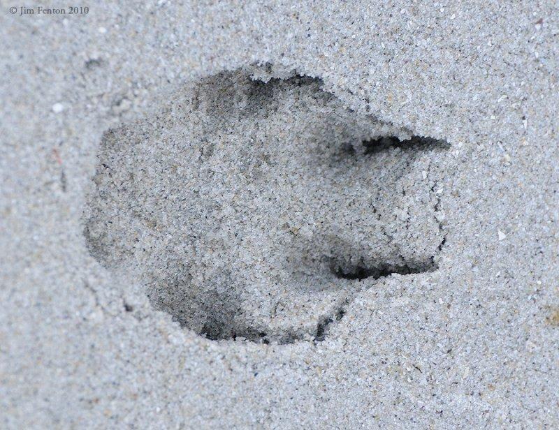 _NW00228 Predator Footprint